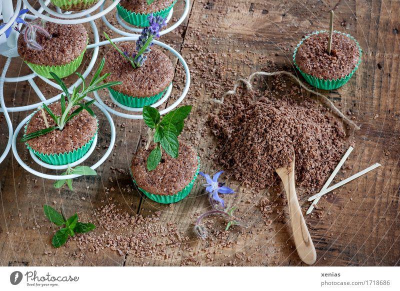 Kuchen mit Kräuter in Muffinförmchen wie in der Gärtnerei angeordnet Schokoladenkuchen Lebensmittel Teigwaren Backwaren Süßwaren Kräuter & Gewürze Zucker