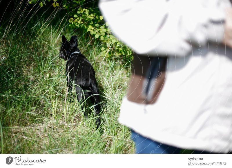 Neugierde Hund Mensch Natur Pflanze Tier Umwelt Wiese Leben Bewegung Gras Freiheit Wege & Pfade Freundschaft bedrohlich Idylle Neugier