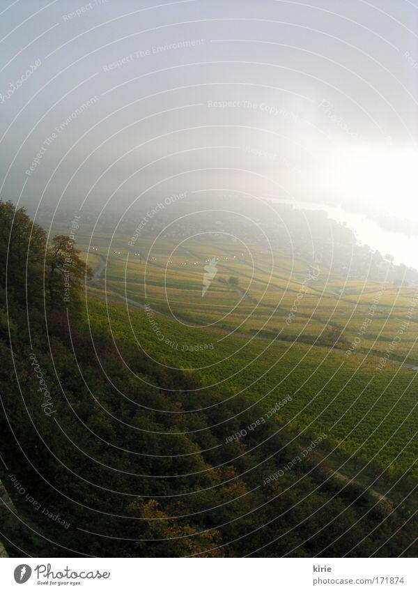 Morgenstimmung Natur Himmel Wolken Landschaft Nebel Fluss Wein Sträucher Unendlichkeit Hügel Vogelperspektive Flussufer Rhein Rheinland-Pfalz Rheingau