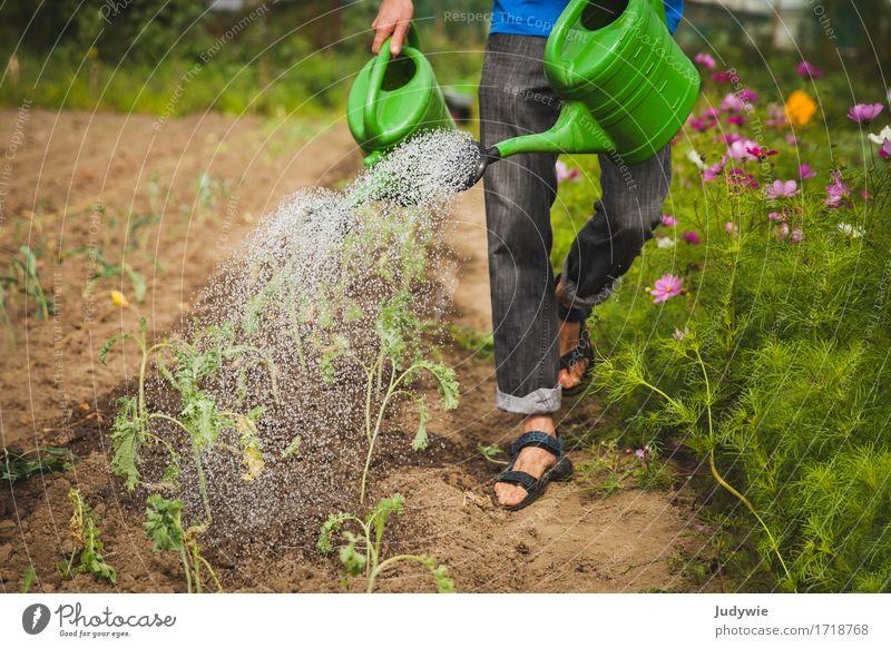 Wachset und gedeihet Gesundheit Gesunde Ernährung Erholung Freizeit & Hobby Gartenarbeit Sommer Arbeit & Erwerbstätigkeit Beruf Bauernhof Landwirt