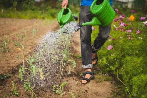 Wachset und gedeihet Mensch Natur Mann Pflanze Sommer Wasser Gesunde Ernährung Blume Erholung Erwachsene Umwelt Beine Gesundheit Garten