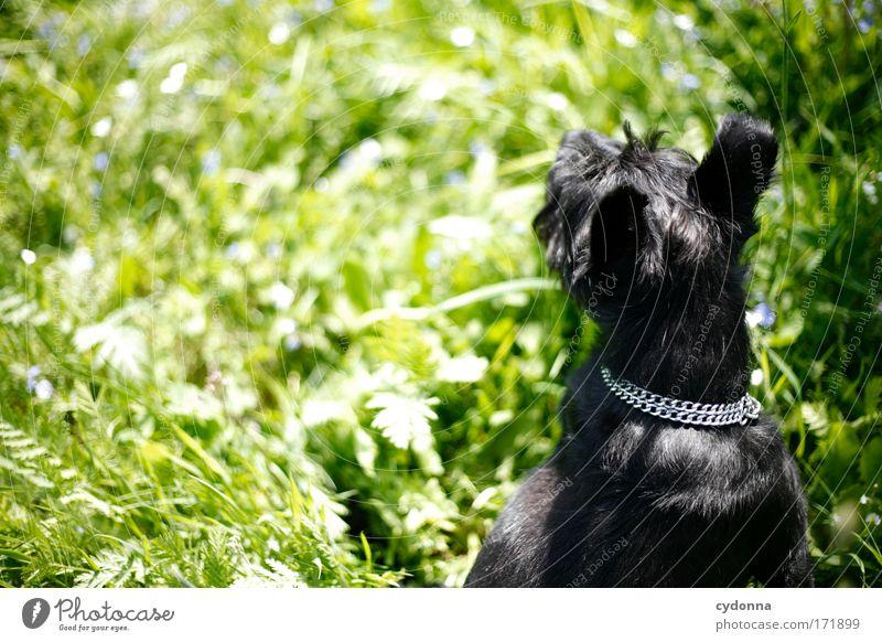 Frühlingsduft Hund Natur schön Pflanze Tier Umwelt Leben Wiese Freiheit Bewegung Gras träumen Spaziergang Neugier Fell Idylle