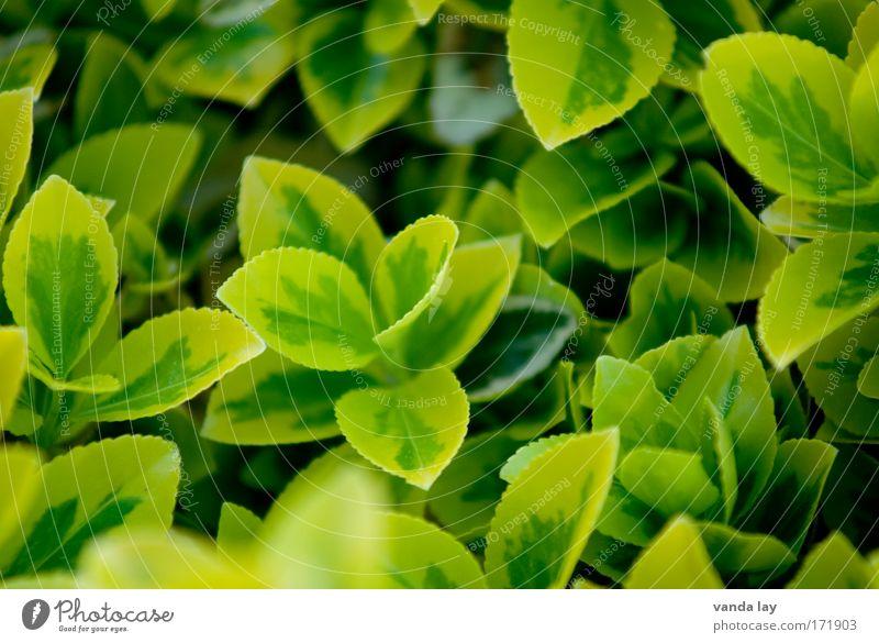 frisches grün Natur Pflanze gelb Umwelt Grünpflanze