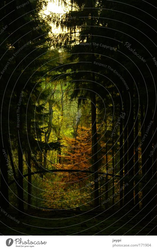 Lichtblick Natur Baum grün Pflanze gelb Wald Herbst Landschaft Umwelt Grünpflanze Lichtblick umgefallen Schneise
