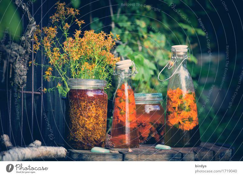Heilkräuteröle Natur grün gelb Blüte Gesundheit Garten Gesundheitswesen orange leuchten ästhetisch Wohlgefühl Körperpflege Leidenschaft Duft Kosmetik positiv