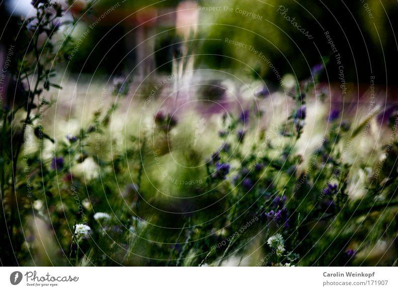 Heuschnupfen VII. Natur Pflanze Sommer Blume Umwelt Landschaft Wiese Gras Garten Park ästhetisch Sträucher Schönes Wetter