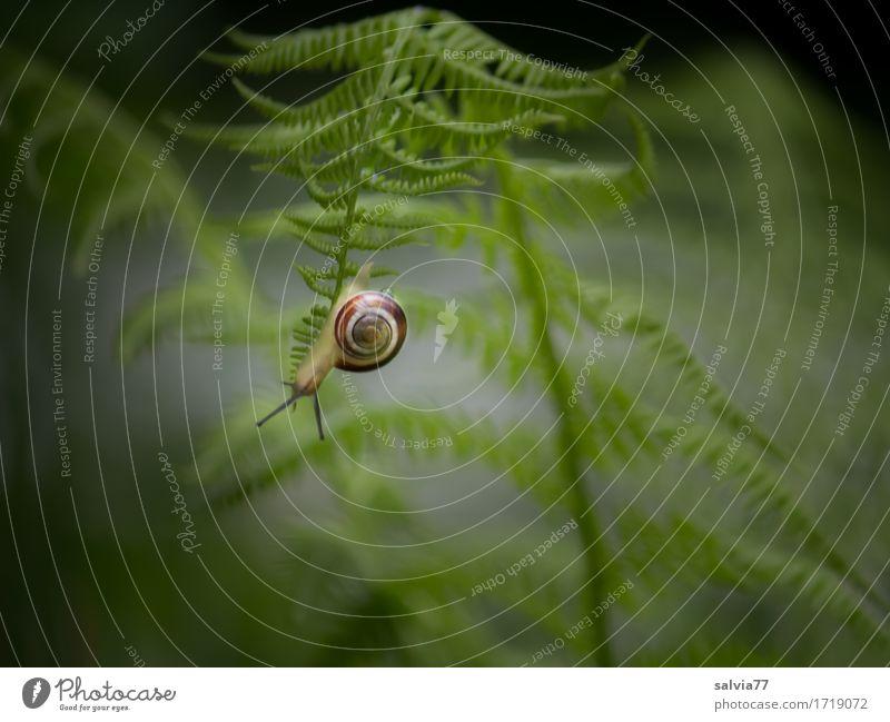 Orientierung | falsche Richtung Natur Pflanze grün Blatt Tier Wald Wege & Pfade Garten grau Perspektive unten hängen abwärts Schnecke krabbeln Farn