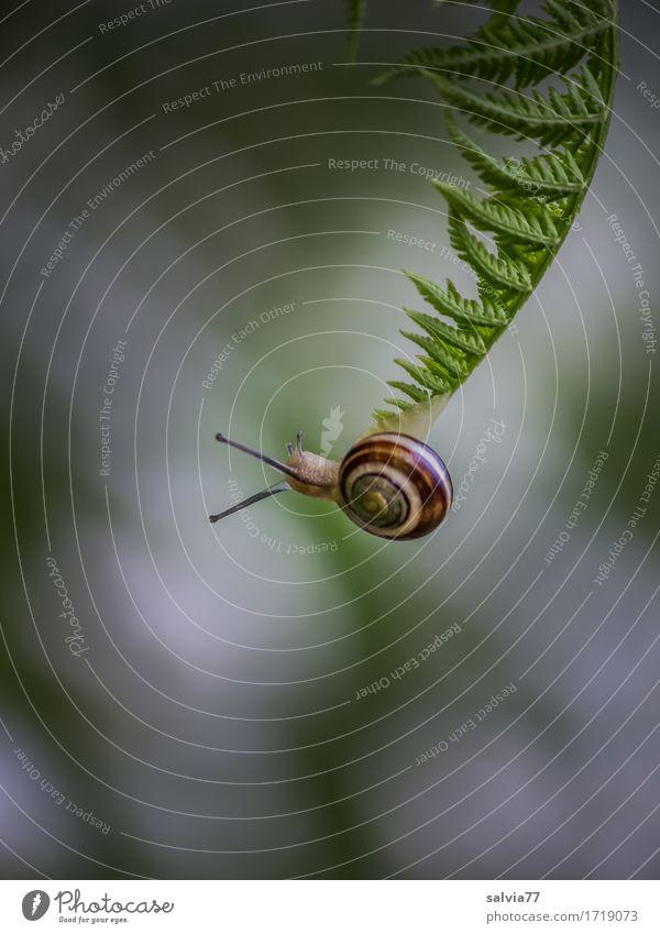 Hänge-Party Natur Pflanze grün weiß Blatt Tier Umwelt Wege & Pfade Wildtier Ziel Gelassenheit Vertrauen Mut Ende hängen krabbeln