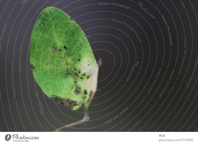 Blatt Natur Pflanze Sommer grün Blatt ruhig Frühling natürlich grau Design elegant ästhetisch authentisch Blühend einzigartig einfach
