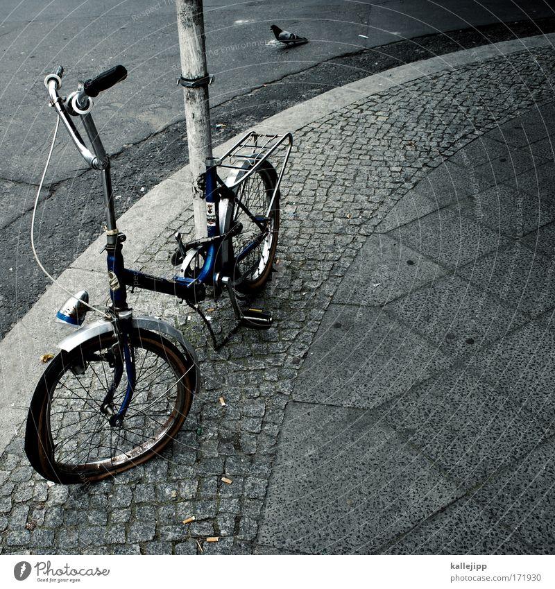 bordsteinschwalbe Stadt Tier Umwelt Traurigkeit grau Vogel Fahrrad trist Klima kaputt trendy trashig nachhaltig Taube Klimawandel gebrauchen