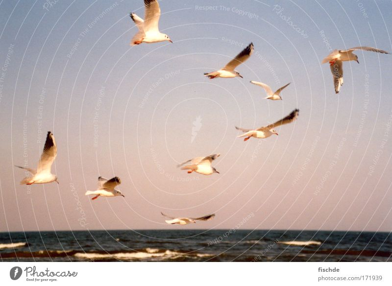 9 x Möwe 1 x Meer Himmel Natur Ferien & Urlaub & Reisen Wasser Sommer Erholung ruhig Ferne Küste Freiheit Sand Horizont Luft Zusammensein Wellen