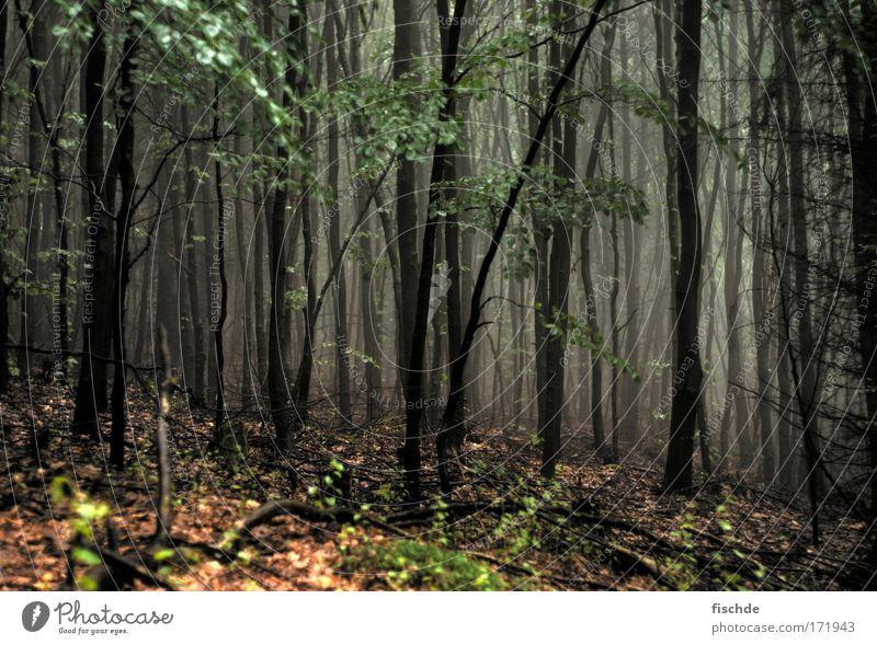 düstere aussichten III Farbfoto Außenaufnahme Menschenleer Ausflug Ferne Berge u. Gebirge Joggen Umwelt Natur Landschaft Pflanze Erde Luft Nebel Baum Moos Park