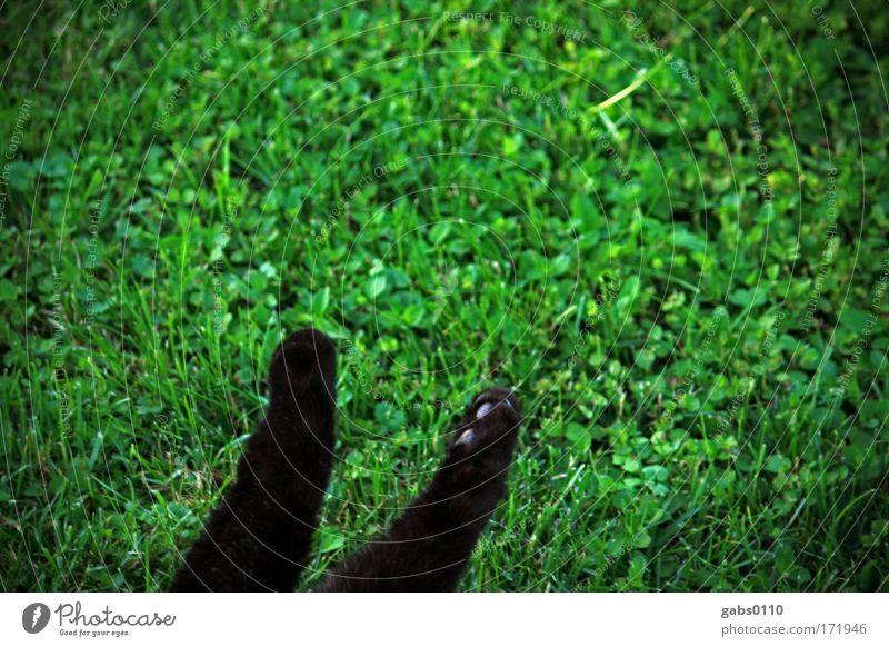 katzentatzen im grünen Natur Pflanze schwarz Tier Wiese Spielen Gras Garten Katze Umwelt Erde schlafen liegen Jagd genießen