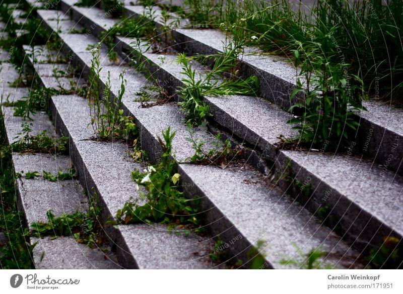 Damals. Farbfoto Außenaufnahme Muster Menschenleer Tag Schatten Kontrast Schulhof Deutschland Europa Stadtrand Ruine Bauwerk Gebäude Architektur Treppe