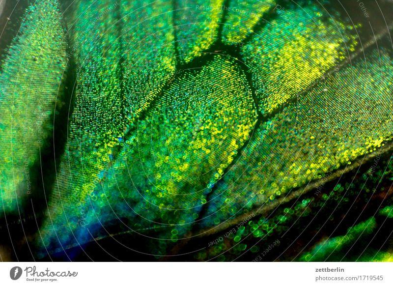 Schmetterling mit Migrationshintergrund Farbe Farbstoff Flügel exotisch Urwald Zeichnung tropisch prächtig Farbmittel