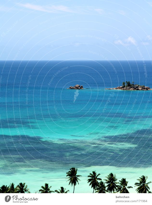 unverbaubarer blick Ferien & Urlaub & Reisen Tourismus Abenteuer Ferne Freiheit Himmel Wolken Schönes Wetter Palme Wellen Küste Strand Riff Korallenriff Meer