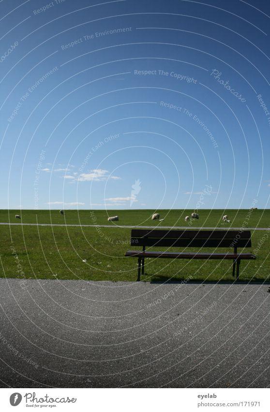 550 - Zeit für eine Pause ? Natur Himmel grün blau Sommer Ferien & Urlaub & Reisen Einsamkeit Tier Erholung Wiese Freiheit Wege & Pfade Landschaft Küste Wetter