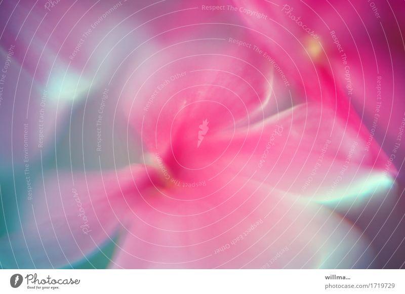 samtig-weich Blume Blütenstempel rosa Aquarell Pflanze sanft duftig verträumt zart Pastellton Farbfoto Außenaufnahme Unschärfe