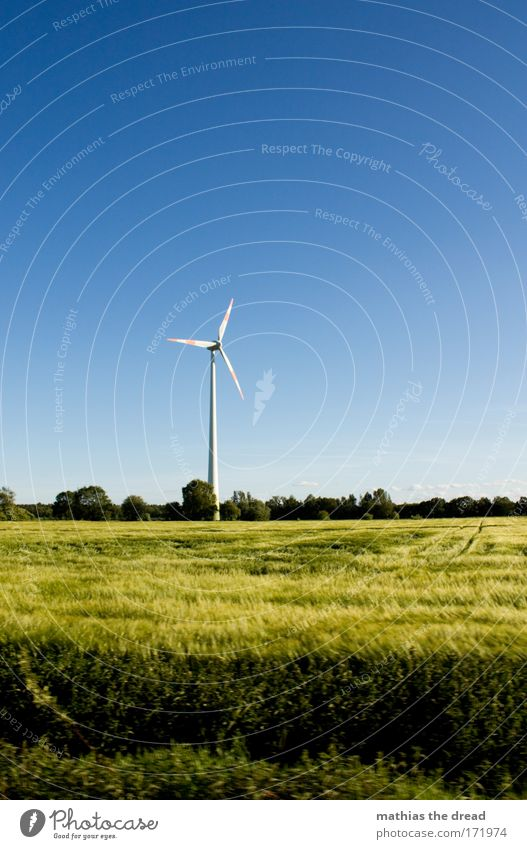 BRANDENBURG Natur Baum Sonne Sommer Erholung Wiese Gras Wärme Landschaft Luft Feld Wind Umwelt groß Horizont Energiewirtschaft