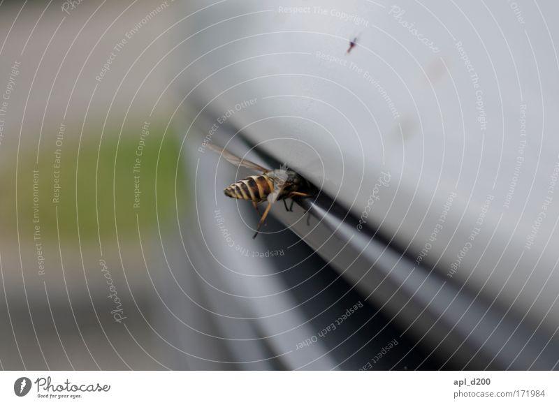 Mit dem Kopf durch die Wand Farbfoto Außenaufnahme Nahaufnahme Detailaufnahme Textfreiraum oben Tag Schwache Tiefenschärfe Tierporträt Verkehr Verkehrsmittel