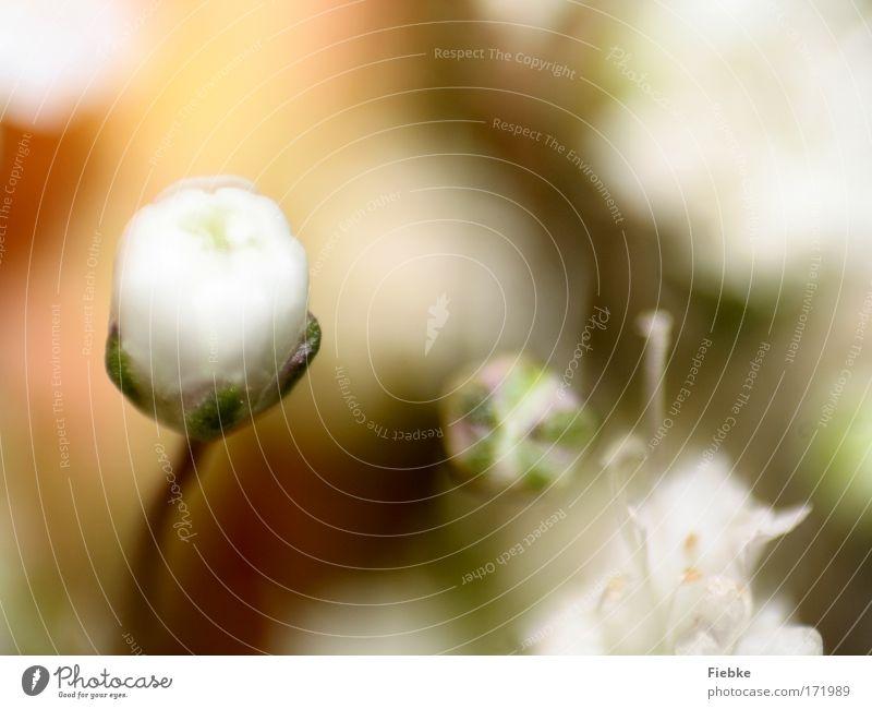 bright Natur schön Blume grün Pflanze Leben Blüte Frühling Wärme hell elegant Umwelt Hoffnung Trauer ästhetisch Wachstum