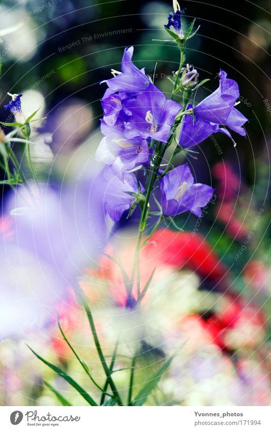 Blumensommer mehrfarbig Außenaufnahme abstrakt Morgen Tag Licht Reflexion & Spiegelung Lichterscheinung Sonnenlicht Sonnenstrahlen Gegenlicht Unschärfe