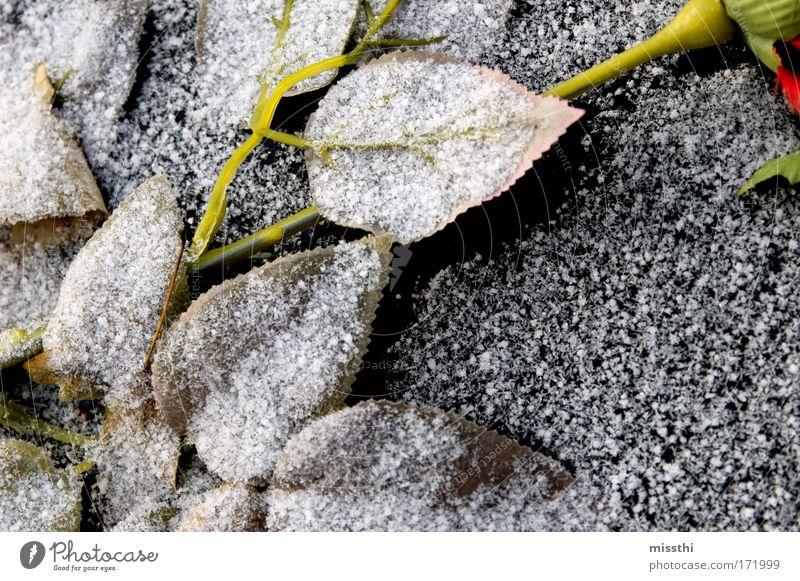 Weißer Hauch Farbfoto Außenaufnahme Menschenleer Tag Eis Frost Schnee Pflanze Rose Blatt Friedhof Kunstblume Stein trist schwarz weiß Mitgefühl trösten ruhig