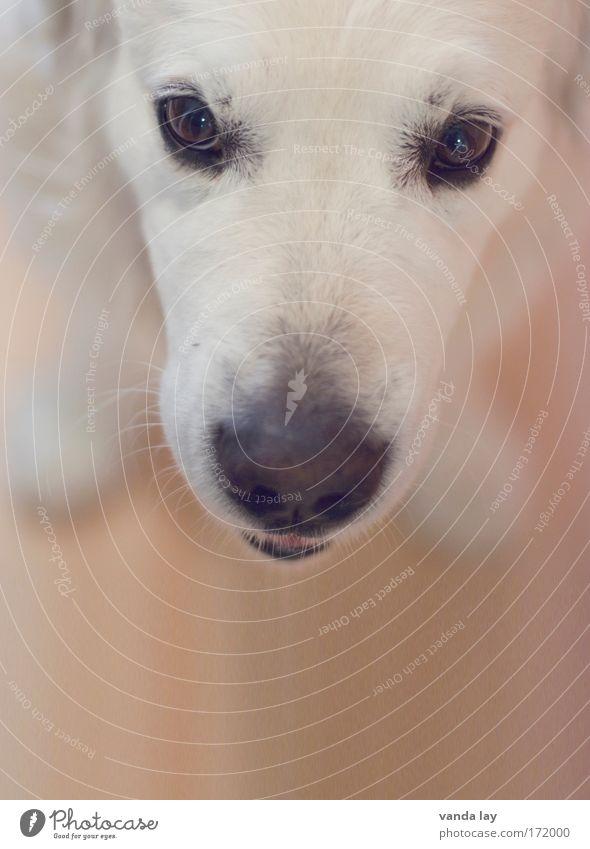Herr Maier Farbfoto Menschenleer Textfreiraum unten Unschärfe Starke Tiefenschärfe Tierporträt Blick Blick in die Kamera Haustier Hund 1 frech Freundlichkeit