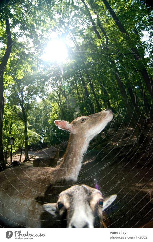 Expidition ins Tierreich Natur Baum Sonne Pflanze Sommer Landschaft Idylle Zoo Wildtier Jagd Jäger Reh Ziegen Rehkitz Wildpark