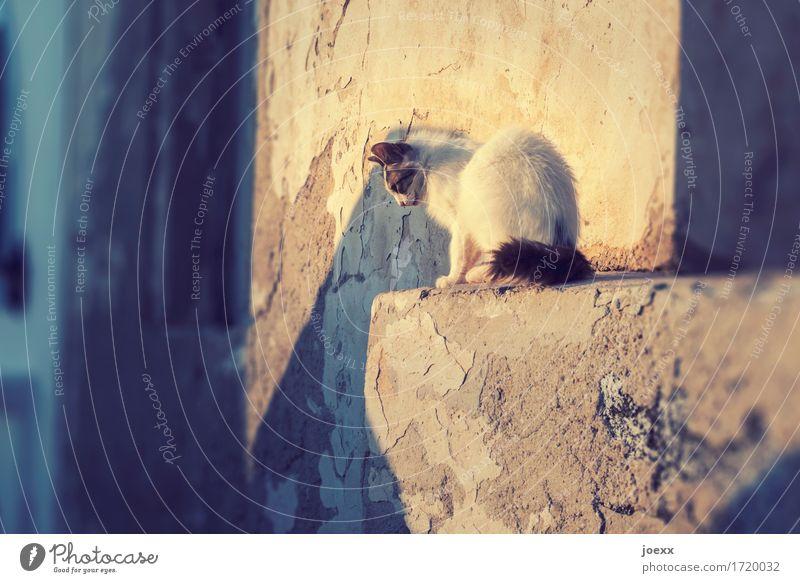 Der richtige Moment Mauer Wand Haustier Katze 1 Tier sitzen warten Neugier Wärme braun gelb weiß entdecken beobachten fokussieren gespannt Farbfoto