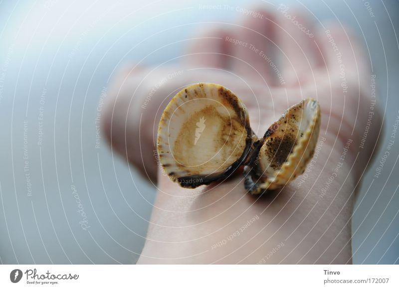 Mupfel Natur Hand Ferien & Urlaub & Reisen Meer Einsamkeit ruhig Küste Traurigkeit Zufriedenheit Arme natürlich ästhetisch Zukunft Hoffnung Wandel & Veränderung einzigartig