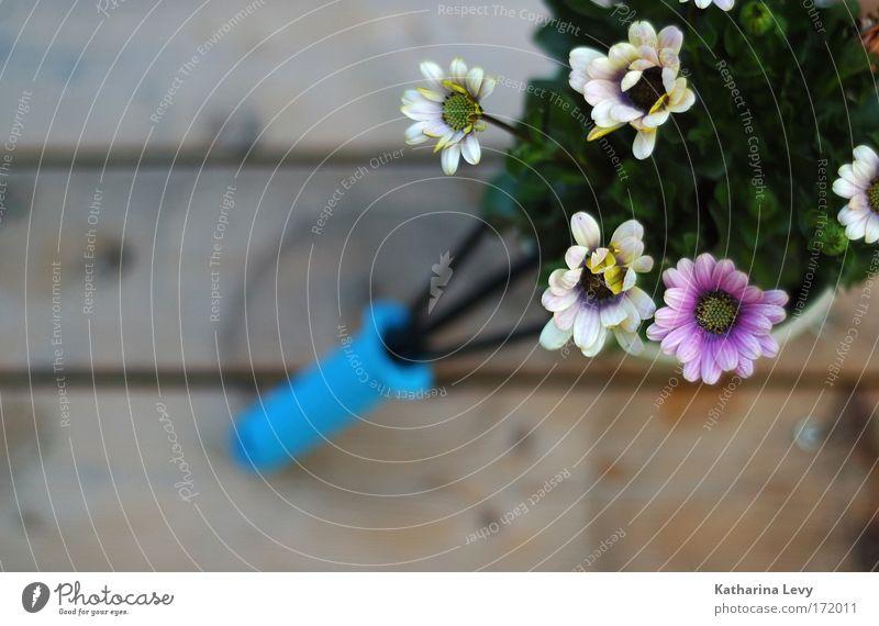 Garten zum in die Ecke stellen weiß Blume blau Pflanze Erholung Blüte Holz Zufriedenheit rosa Wachstum nah Dekoration & Verzierung Häusliches Leben Holzbrett