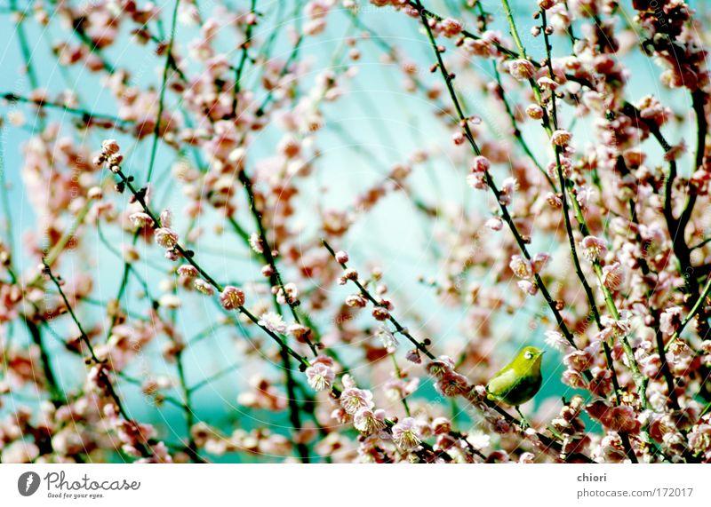 Natur schön Himmel grün Freude Tier Leben Spielen Fenster Blüte Frühling Vogel Kunst klein rosa Morgen