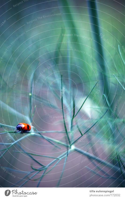 beetlejuice Natur Tier Farbe Wege & Pfade warten klein Wildtier tierisch Käfer