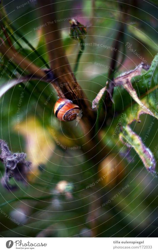 @ Natur Pflanze ruhig Tier Farbe Schnecke Grünpflanze