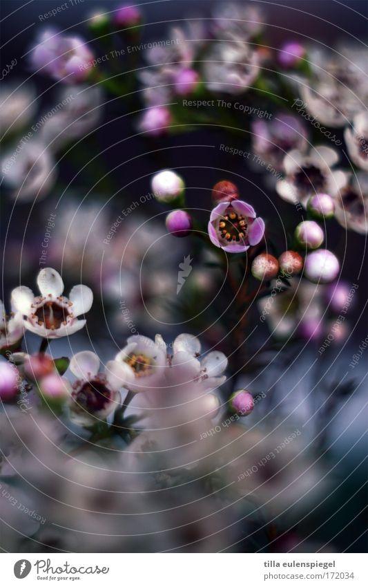5 Farbfoto Unschärfe Schwache Tiefenschärfe Pflanze Sommer Blume Blüte Park Blumenstrauß Duft exotisch fantastisch Fröhlichkeit frisch schön Kitsch natürlich