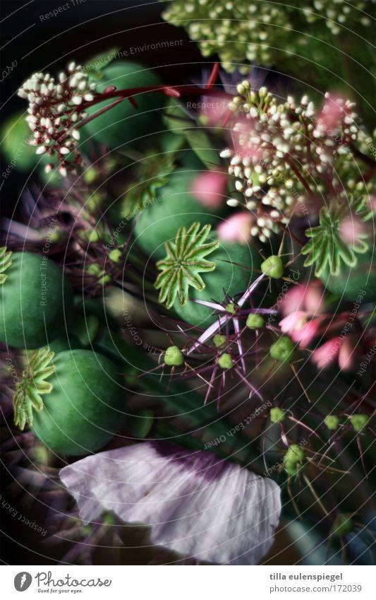 6 Farbfoto Innenaufnahme Experiment abstrakt Muster Strukturen & Formen Menschenleer Schatten Pflanze Blüte Blumenstrauß außergewöhnlich dunkel fantastisch
