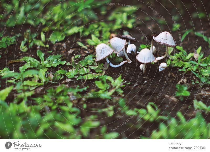 Pilz Natur Pflanze Urelemente Gras Efeu Grünpflanze Wildpflanze dreckig grün weiß Wachstum Hof Farbfoto Nahaufnahme Menschenleer Tag Schwache Tiefenschärfe