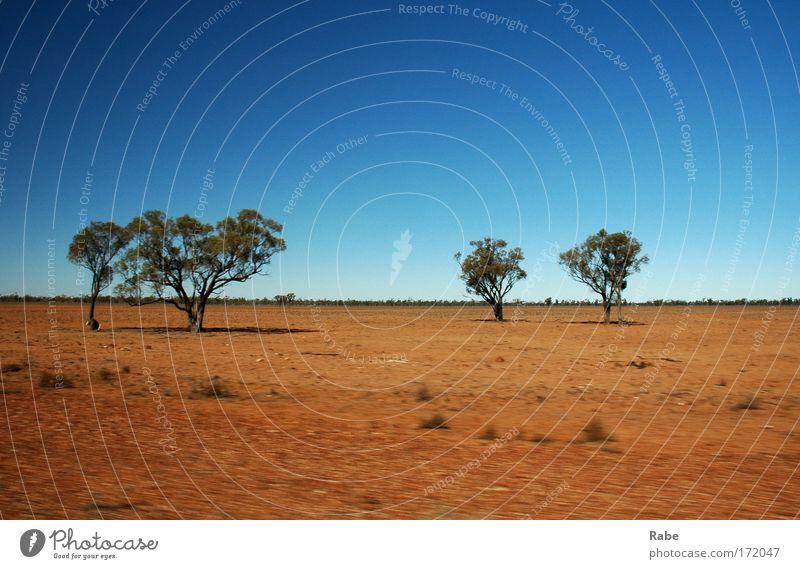 Outback 2006 Himmel Natur Baum rot Sonne Sommer Ferien & Urlaub & Reisen Ferne Freiheit Landschaft Umwelt Sand hell Erde Ausflug frei