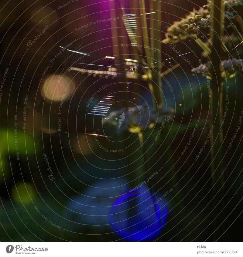 ein Netz an der Sonne Natur grün blau Pflanze rot schwarz Tier gelb Erholung Wiese Garten Park Landschaft Zufriedenheit braun Feld
