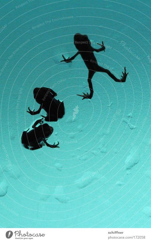 Froschtraum V - Liegestütz für die Angebetete Natur Wasser Umwelt Wassertropfen 3 sitzen Coolness türkis Makroaufnahme Frosch Verliebtheit Begierde hocken Tierliebe Übermut Kröte