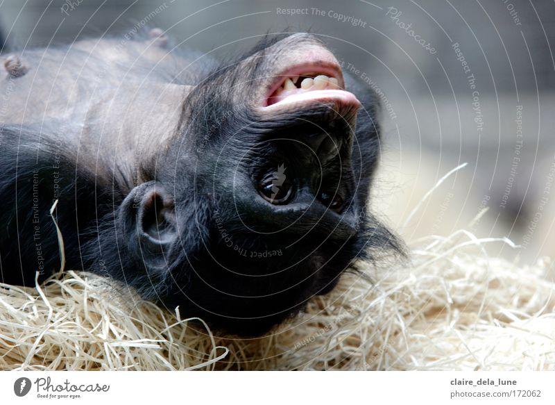 Crazy People Freude Tier Glück verrückt Zoo dumm Euphorie