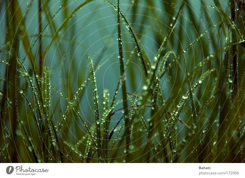 Regentropfen Natur grün Gras Wassertropfen Lichtspiel Wildpflanze