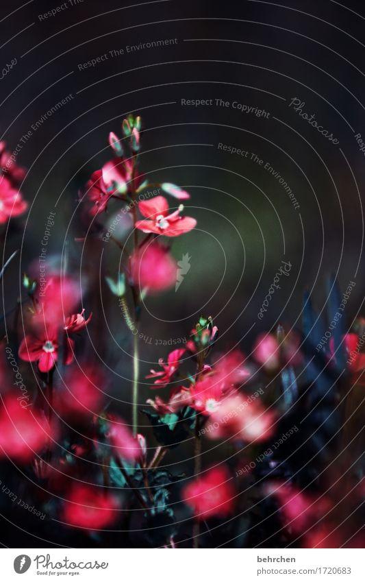 ein licht im dunkeln Natur Pflanze Sommer schön Blume Blatt Blüte Traurigkeit Wiese Gras klein Garten Park Wachstum Blühend