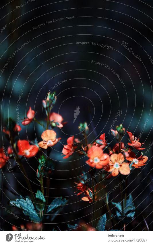 beieinander sein Natur Pflanze Sommer Schönes Wetter Blume Gras Blatt Blüte Wildpflanze Veronica Garten Park Wiese Feld Blühend Duft verblüht Wachstum schön