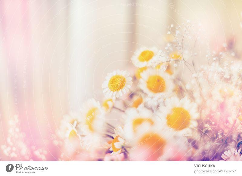 Margeriten Blumen Lifestyle Design Sommer Häusliches Leben Dekoration & Verzierung Natur Pflanze Sonnenlicht Schönes Wetter Blatt Blüte Blühend rosa Pastellton