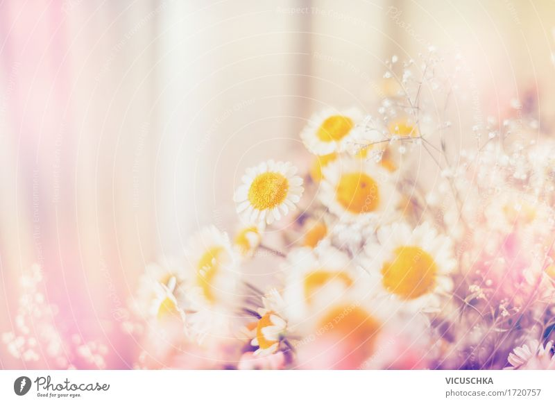 Margeriten Blumen Natur Pflanze Sommer schön Blatt gelb Blüte Lifestyle rosa Design Häusliches Leben Dekoration & Verzierung Blühend Schönes Wetter