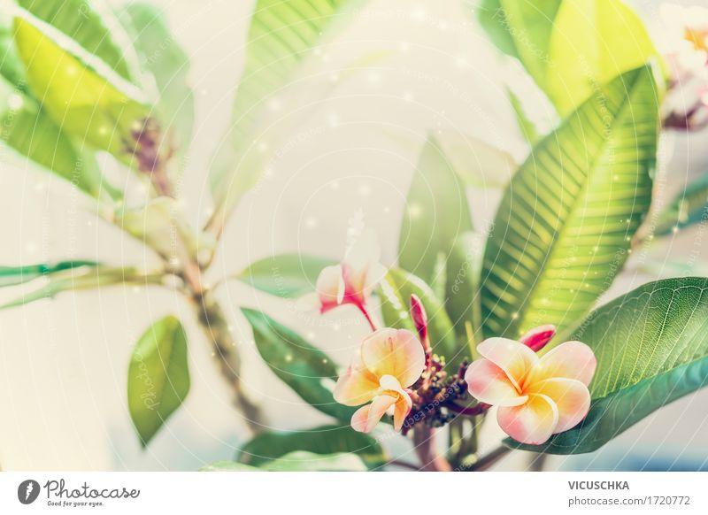 Tropische Frangipani Pflanze Lifestyle Erholung Spa Sommer Garten Natur Frühling Schönes Wetter Wärme Blume Blatt Blüte exotisch Park Blühend gelb Design Duft