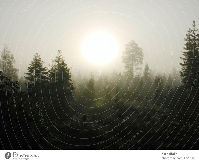 Nebelsonne Natur Baum ruhig Wald Traurigkeit Stimmung Trauer Schweden trösten