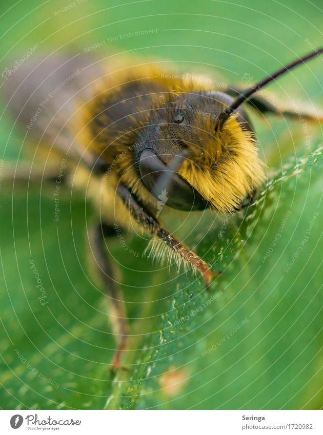Irokesenschnitt Natur Pflanze Tier Frühling Sommer Gras Sträucher Blatt Blüte Garten Park Wiese Wald Wildtier Fliege Biene Tiergesicht Flügel 1 fliegen